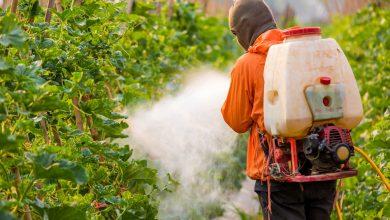 صورة الاستثمار في الزراعة الايكولوجية لضمان المستقبل