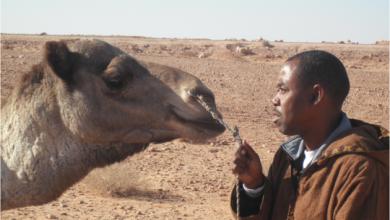 Photo of باحثان جزائريان يكتشفان مرضا جديدا في ورقلة