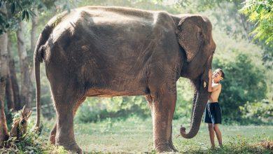 Photo of إكتشاف بقايا فيل عمره 3 ملايين سنة في الجزائر