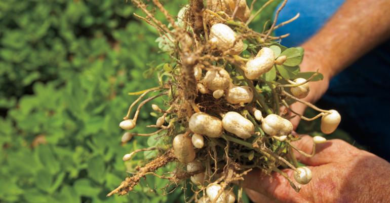 Photo of مشروع زراعة الفول السوداني في ولاية الوادي يحقق نتائج مبهرة