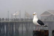Photo of أكثر من ثلاثة آلاف طائر مائي يعيش في المناطق الرطبة بقسنطينة