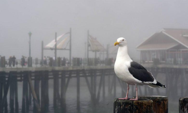 صورة أكثر من ثلاثة آلاف طائر مائي يعيش في المناطق الرطبة بقسنطينة