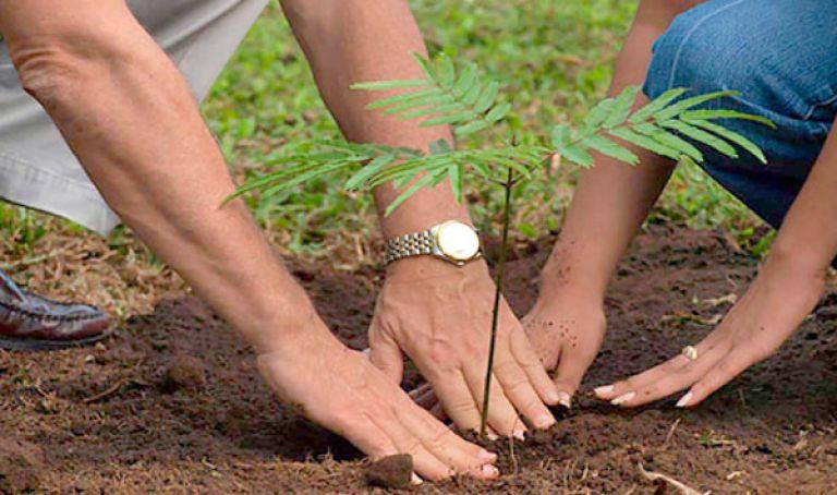 Photo of غرس مليون شجرة في ولاية البليدة خلال سنة واحدة