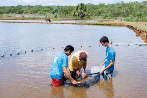 Photo of مكافحة البعوض والأمراض باستزراع وحدات سمك في ايليزي