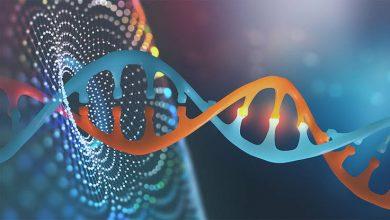 صورة مدخل عام إلى أساسيات علم الوراثة وخصائصه